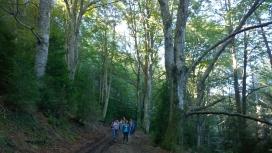 Els boscos madurs són un espai de benestar i salut per a les persones