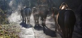 La Fundació aompanya processos de desenvolupament personal, educatius i formatius amb el suport dels cavalls