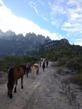 Els camins ramaders representen una connexió històrica entre territoris, amb implicacions per a la biodiversitat i la protecció de la natura