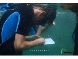 Els camps alternes immersions, voluntariat ambiental i sessions formatives