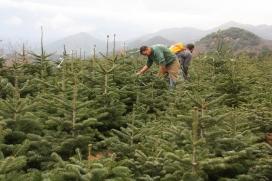 Viver d'arbres/ Font: Bloc Objectiu Residus