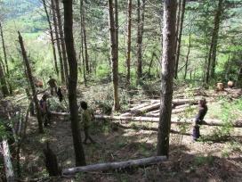 L'entitat Boscos de muntanya organitza estades de voluntariat als boscos de diferents àrees del Prineu (imatge: projecteboscos.cat)
