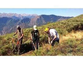 Enguany les estades seran a la Vall de Cardós, al Pallars Sobirà, i al Massís de l'Orri, al Parc  Natural de l'Alt Pirineu (imatge: projecteboscos.cat)