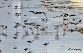 Cames llatgues al Delta del Llobregat (imatge: SOSDeltaLlobregat.org)