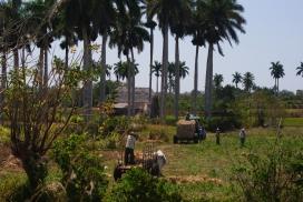 Comunitat camperola a Cuba. Font: Flickr