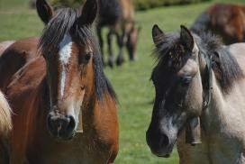 Cavalls. Font: Jordi's (Flickr)