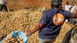 CODESPA desenvolupa molts projectes en l'àmbit rural i de la sobirania alimentària.