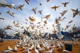 Coloms per la pau alcen el vol. Font: United Nations Photo, Flickr