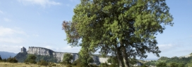 Un espai de Collsacabra  custodiat per Paisatges Vius (imatge:paistgesVius)