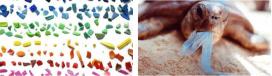 L'Associació Cetàcea alerta sobre el perill de la contaminació per plàstics del mar (imatge:associaciocetacea.org)