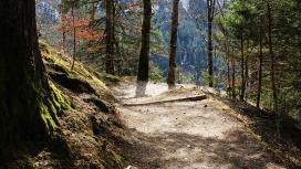 Un bosc frondòs amb un camí. La guia també conté consells per respectar el medi ambient.