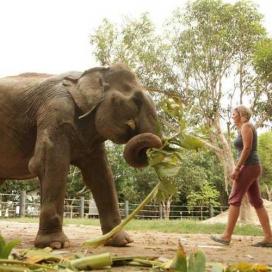 Voluntariat de conservació ambiental a Tailàndia. Font: Hacesfalta.org