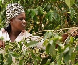 Agricultora de cafè de Comerç Just. Font: Fairtrade