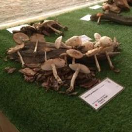Exposició de Bolets de Tarragona (11 de novembre, Tarragona)