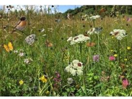 Els prats de dall són un dels hàbitats prioritaris sobre els que cal fer un seguiment (imatge: Grup de Natura Solsonès)