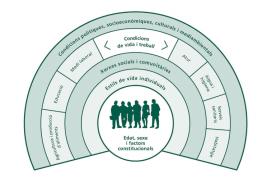 Els determinants socials de la salut. Font: Informe de Salut de Barcelona 2013