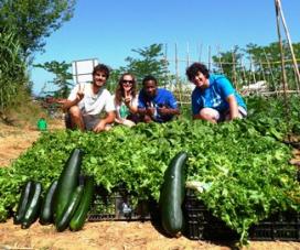 Primera collita de l'hort eco-solidari de la UdG