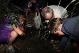 Voluntaris recol·lectant crancs de riu americà en jornades nocturnes (imatge; assoc-cen.org)
