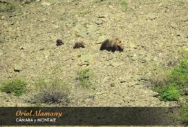 La zona on han estat avistats els óssos és de difícil accés, és on mare troba tranquilitat pels seus cadells (imatge: Oriol Alemany)