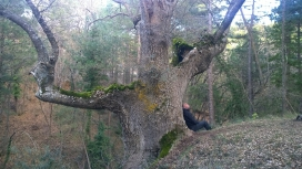 Sèlvans ha identificat 1.304 boscos madurs  que sumen unes 30.000 hectàrees