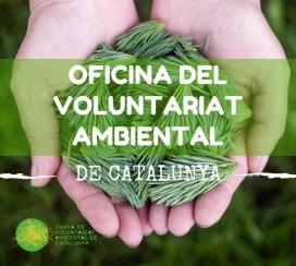 Hi trobaràs crides de voluntariat on col·laborar (Imatge: XVAC)