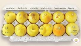 Les 12 llimones volen mostrar els 12 possible símptomes que podem detectar al pit. (Font: worldwidebreastcancer.org)