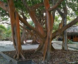 Metàfora de l'arbre, Mario Carvajal (Flicker)