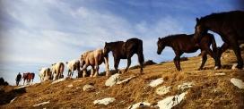 Es pot acompanyar els cavalls durant tot el recorregut o només per un dels trams