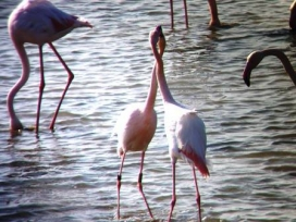 L'ornitologia és un dels atractius de visitar l'espai MónNatura Delta (imatge: MónNaturaDelta.com