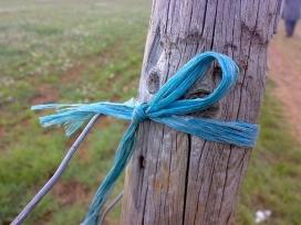 Cinta lligada a un arbre. Compromís_dUENdEdU_Flickr