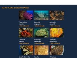 La col·laboració dels voluntaris i voluntàries ambientals és essencial per a poder aconseguir cartografiar les poblacions de les principas espècies de coralls i gorgònies (imatge: observadorsdelmar.cat)