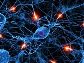 Imatge del sistema nerviós