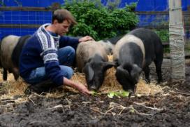 """Feedback reivindica amb la campanya """"The pig idea"""" la possibilitat de donar les restes de menjar als animals, com tradicionalment es  feia en les granges, i prohibit segons les normatives actuals (imatge: feedbackglobal.org)"""