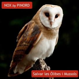 Pinord elabora el vi solidari Nox, amb el qual contribueix a la conservació de les òlibes i els xots (imatge: wnature.org)