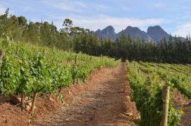 Sabé i Sahoro, dos pobles de Guinea participaran en el programa de seguretat alimentària.
