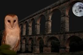 Sortida nocturna al Pont del Diable (23 d'abril, Tarragona).