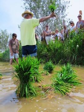 Es pot participar en el programa de voluntariat ambiental de  Riet Vell o bé participar en els esdeveniments puntuals, com la Festa de la Plantada (imatge: Reserva Riet Vell)