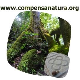 Compensa Natura és un programa amb el que les empreses poden col·laborar en la protecció dels boscos madurs amb l'entitat Accionatura (imatge: accionatura.org)