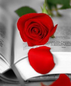 La rosa i el llibre, protagonistes de la diada