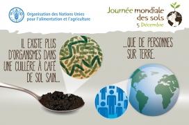 Campanya de la FAO recordant la importància del sòl,  pel dia mundial del sòl celebrat el 5 de desembre (imatge: fao.org)