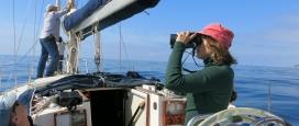 Amb l'entitat ambiental Submon es pot aprendre sobre la fauna marina del Mediterrani (imatge: arrelia.cat)