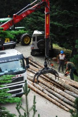 El 2007 les entitats ambientals i els veïns es van mobilitzar contra la tala d'un bosc madur a l'Obaga de Carboners (imatge:amicsdelsarbres)