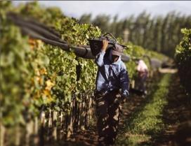 Agricultor en la seva jornada laboral. Font: Wikimedia