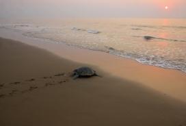 Una de les espècies marines més afectades pel plàstic