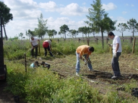 Voluntariat ambiental - Font: caminoslibres.es