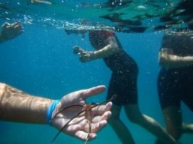 Els camps de treball juvenils de Xatrac estan vinculats a l'ecologia marina i litoral (imatge: xatrac.org)