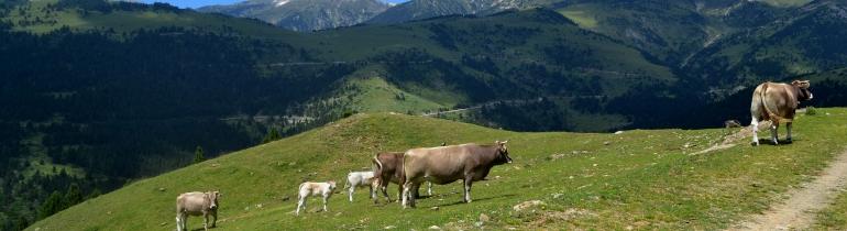 Els prats i les pastures d'alta muntanya del nou Parc Natural de les Capçaleres del Ter i del Freser (imatge:wikimedia commons)