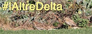 SOS Delta inicia un projecte de ciència ciutadana per la protecció del territoris no protegits del Delta del Llovregat (imatge: sosdeltallobregat.org)