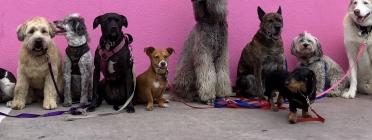 Cada any, gairebé 2.000 animals de companyia, gats i gossos, són trobats al carrer, perduts o abandonats. Font: Unsplash. Font: Font: Unsplash.