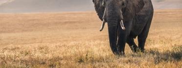 Tots els animals neixen iguals davant la vida i tenen els mateix dret a l'existència. Font: Unsplash. Font: Font: Unsplash.